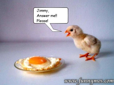 http://funnymos.com/funny-pictures/chicken.jpg